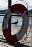 在斯德哥尔摩江边的海鸥 库存照片
