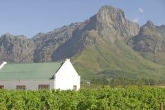 在斯泰伦博斯酒区域的历史的荷兰海角建筑学和葡萄树,在开普敦外面,南非 免版税库存照片