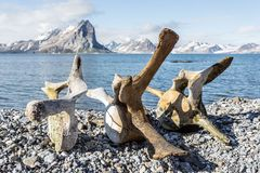 在斯瓦尔巴特群岛海岸的老鲸鱼骨头,北极 免版税库存图片