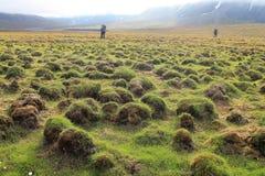 在斯瓦尔巴特群岛的自然 免版税库存照片
