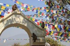 在斯瓦扬布纳特佛塔寺庙复合体的尼泊尔祷告旗子 图库摄影