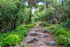 在斯科派洛斯岛海岛上的陡峭的森林道路 库存图片