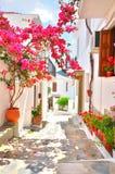 在斯科派洛斯岛,希腊狭窄的街道上的九重葛  图库摄影