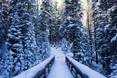 在斯诺伊冬天高涨的一座暗藏的桥梁在科罗拉多 免版税库存图片