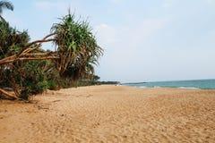 在斯里兰卡的南海岸的原始海滩 免版税库存图片