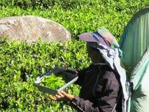 在斯里兰卡的高地 库存图片