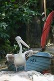在新加坡动物园的孟加拉老虎 库存照片