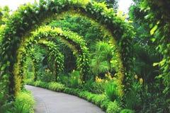 在新加坡植物园的镶边样式地标 免版税库存照片