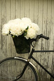 在新娘的自行车的牡丹 免版税库存照片