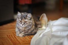 在新娘礼服附近的美丽的小小猫 免版税库存照片