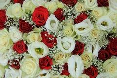 在新娘花束的红色和白玫瑰 免版税库存图片