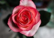 在新娘花束的金婚圆环 环形玫瑰色婚礼 套在玫瑰被采取的特写镜头的婚戒 库存照片