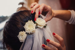 在新娘` s头发,婚礼的样式的白玫瑰 免版税库存照片