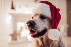 在新年` s伊芙的狗 库存图片