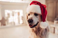 在新年` s伊芙的狗 免版税库存图片