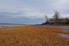 在新斯科舍烘干在华莱士海湾泥滩的棕色海草在一灰色11月天 免版税图库摄影