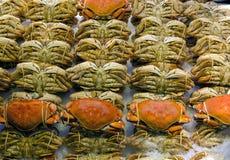 在新海鲜摊位的太平洋大蟹显示 免版税库存照片