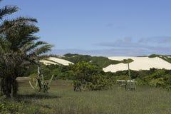 在新生, RN,巴西的Genipabu沙丘 图库摄影