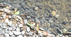 在新的打破的石头的镇静波浪在池塘江边  股票录像
