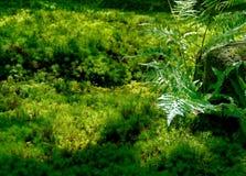在新绿草背景的水下落 库存照片