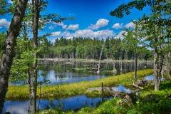 在新罕布什尔山的沼泽  图库摄影