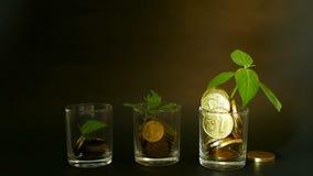 在新芽玻璃和绿色叶子的金黄硬币在黑背景的 财务事务,投资,想法的成功 股票视频
