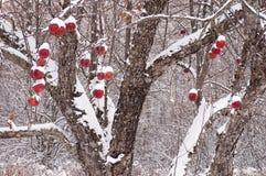 在新降雪以后的苹果树 免版税库存图片
