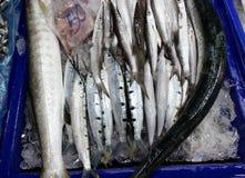 在新鲜市场上卖的长嘴硬鳞鱼鱼 免版税库存图片