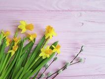 在新鲜桃红色木的秀丽的黄水仙杨柳 库存图片