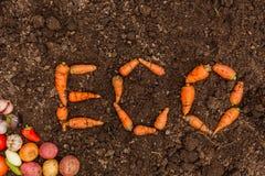 在新鲜的地球背景和一个小组的题字ECO年轻菜 免版税库存图片
