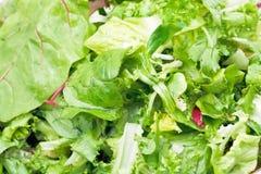 在新鲜的意大利莴苣开胃菜的绿色叶子 图库摄影