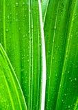 在新鲜的绿色叶子的水下落 库存图片