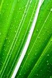 在新鲜的绿色叶子的水下落 免版税库存照片
