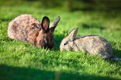 在新鲜的绿草的二只复活节兔子 免版税库存照片