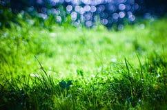 在新鲜的草的Bokeh 库存图片