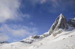 在新鲜的雪下的高山在冬天晒干 免版税库存照片