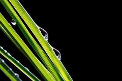 在新鲜的绿色叶子的水下落 免版税库存图片