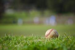 在新鲜的绿草的半新棒球 免版税库存照片