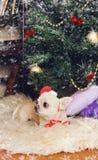 戴在新年内部的可爱的奇瓦瓦狗狗一个红色帽子 库存图片