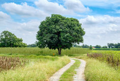 在方式曲线草甸和天空的芒果树 库存照片