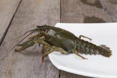在方形的板材的绿色小龙虾 免版税库存图片