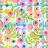 在方格花布的无缝的花波斯菊检查黄色颜色 在条纹装饰品的蓝色花 现实的水彩 免版税库存照片