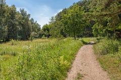 在施特劳斯贝格附近的柏林附近的自然 免版税库存图片