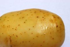 在旁边巨人一唯一土豆关闭背景 免版税库存图片