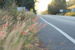 在旁边柏油路的桃红色草花 免版税图库摄影