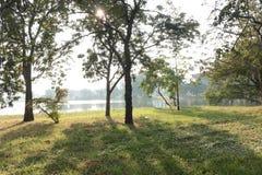 在旁边湖的树在公园 库存照片