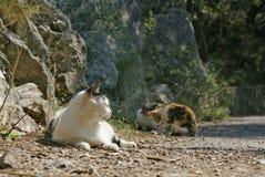 在旁边猫谎言和两只小猫在地面 免版税库存图片