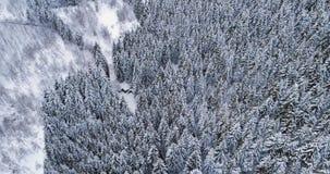 在旅行在簪子弯在山冬天积雪的森林美国五针松的轮路的汽车的向前空中顶视图 股票录像