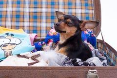 在旅行手提箱的可爱的玩具狗 库存照片