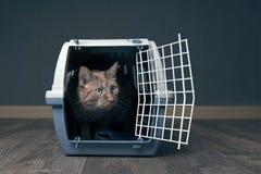 在旅行条板箱的逗人喜爱的姜猫看起来好奇斜向一边 免版税库存图片